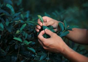 2019第11届中国(重庆)国际茶产业博览会暨紫砂、陶瓷、茶具用品展