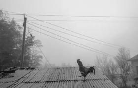 观照——《皖北相》纪实摄影群展 (5)